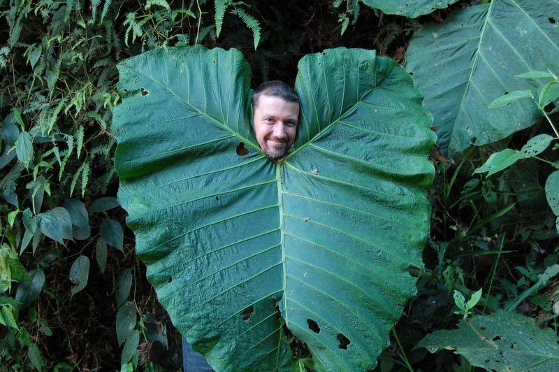 mister money mustache leaf