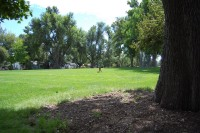 Little MM tests out the public park that will be our new back yard!